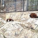 Bears in the Bear Mountain Zoo! by GrassyNoel in Trail & Blazes in New Jersey & New York