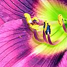 Flower by Tucker in Flowers