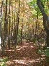 trail heading north to Lehigh Gap by saimyoji in Trail & Blazes in Maryland & Pennsylvania