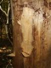 scratches by saimyoji in Trail & Blazes in Maryland & Pennsylvania