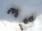 309N winter by saimyoji in Other