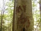 lnt? NOT by saimyoji in Trail & Blazes in Maryland & Pennsylvania