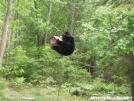 longlakebear03 by saimyoji in Bears