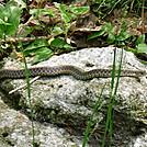 cimg0064 by RyGuy in Snakes