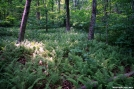 Full of Ferns by Midway Sam in Trail & Blazes in Georgia
