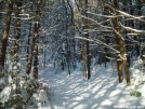 Metacomet-Monadnock Trail by RagingHampster in Views in Massachusetts
