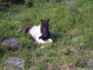 My First Wild Pony! by Kerosene in Other