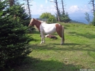 Mare Guarding her Foal by Kerosene in Other