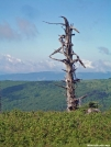 Gnarly Tree by Kerosene in Views in Virginia & West Virginia