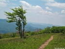 Trail along Whitetop Mountain by Kerosene in Views in Virginia & West Virginia