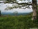 Symms Gap Oak by Kerosene in Views in Virginia & West Virginia