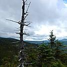 Dead Tree above Carrabassett Valley by Kerosene in Views in Maine