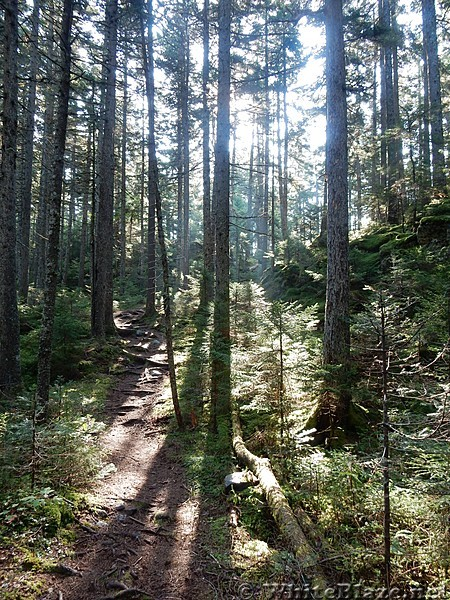 Sunlight through the Pines
