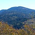 Clingmans Dome Coniferous Forest