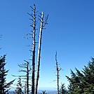 Weathered Trees along the Smoky Ridgeline by Kerosene in Views in North Carolina & Tennessee