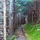 Trail on Mt. Chapman