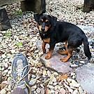 Standing Bear Farm Guard Dog by Kerosene in Other