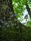 Nantahala National Forest by Kerosene in Flowers