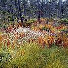 Pretty Marsh Foliage by Kerosene in Trail & Blazes in New Hampshire