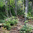 Typical Rooty Trail