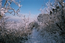 Untracked Trail Through Icy Bushes