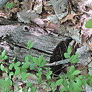 Creatures of the Woods III
