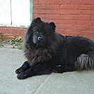 My Dog Genghis Khan
