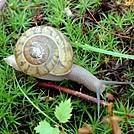 Snail at Crabtree Falls