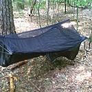 Humble Beginnings by Tuckahoe in Hammock camping