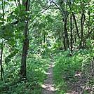 Green Tunnel in SNP, Near Jones Run by Pumba in Views in Virginia & West Virginia