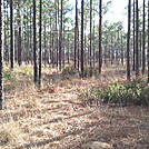 2012-02-12 16.08.53 by treesloth in Florida Trail