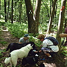 hike hacketstown nj with the pack by Minnitonka in Section Hikers