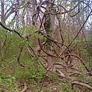 tree by Minnitonka in Members gallery