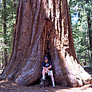 Giant Sequoia by Jim Lemire in Other Trails
