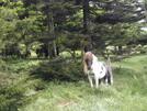Grayson Highlands In Spring by Jim Lemire in Trail & Blazes in Virginia & West Virginia