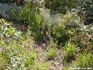Eastern Diamonback Rattlesnake