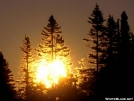 Morning Pines by Magnet in Views in Maine