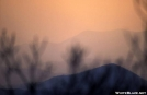 Springer Sunset