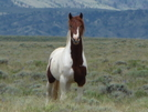 Cdt - Wild Stallion In Wyoming by Lucy Lulu in Continental Divide Trail