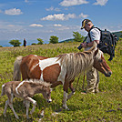Mike and Ponies at Grayson Highlands by Mushroom_Mouse in Views in Virginia & West Virginia