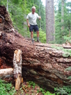 Blowdown On The P.c.t. by neighbor dave in Pacific Crest Trail