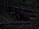 More Blowdowns by neighbor dave in Pacific Crest Trail