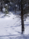 A.t. Winter