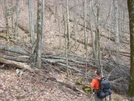 Blowdown 4.5 Miles N Of Noc by Waterbuffalo in Views in North Carolina & Tennessee