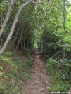 Rhodadedron tunnel by Waterbuffalo in Views in North Carolina & Tennessee