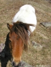 The Ponies of Grayson Highlands by MoBeach42 in Other