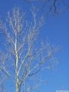 Manassas Gap Tree by Newb in Views in Virginia & West Virginia