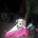 Shelter Mascot...