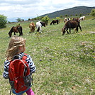 Grayson Highlands - May 2014 by Teacher & Snacktime in Faces of WhiteBlaze members