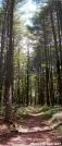 Trail in Dismal Creek by Whistler in Trail & Blazes in Virginia & West Virginia
